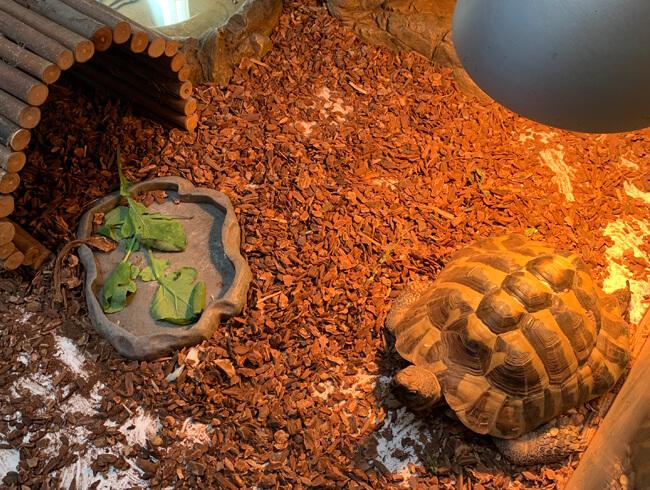 Zółw Kiko w Zielonym Przedszkolu